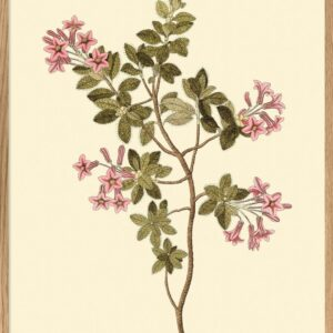 the dybdahl rhododendron hirsutum