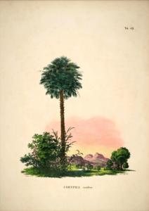 Palmeprint