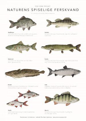 plakat med fisk