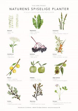Naturens spiselige planter